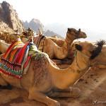 10 rzeczy, które musisz zrobić wEgipcie