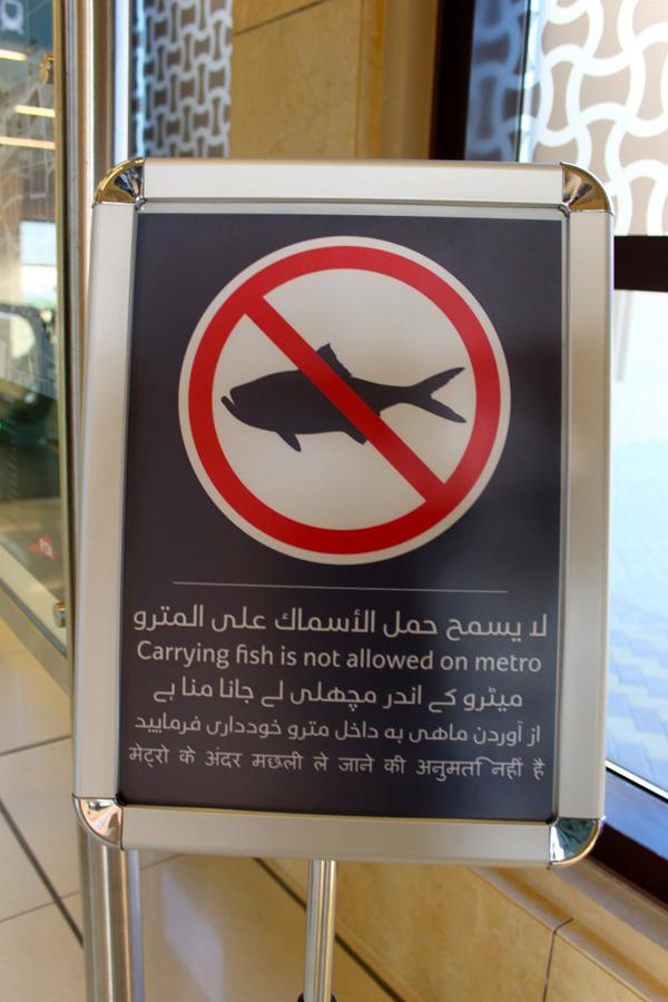 no_fish