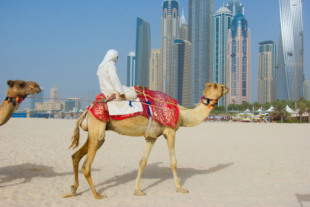 dubai-camel-on-the-town-scape-backround-united-arab-emirates-1600x1071